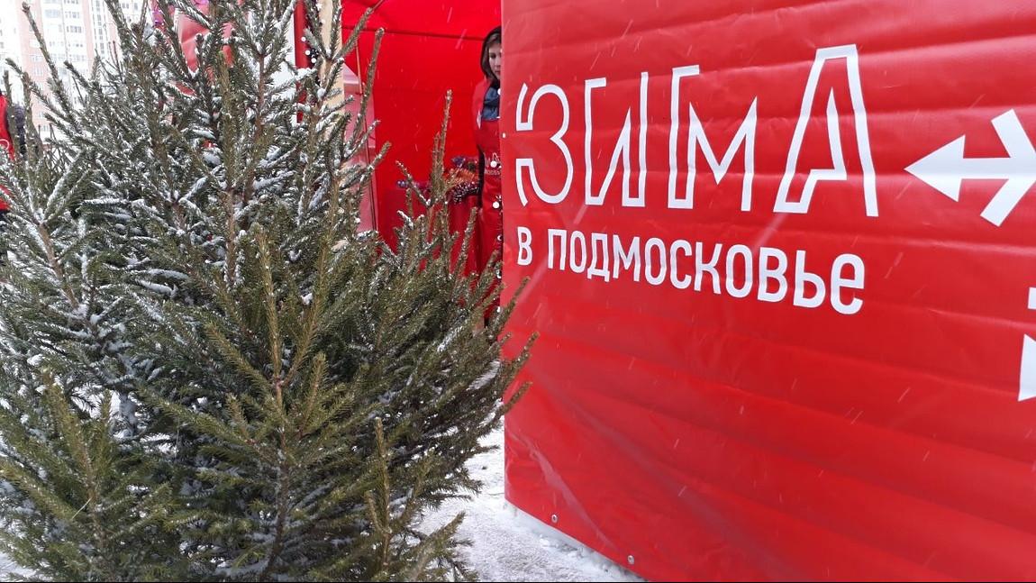 Четыре елочных базара открыли в городском округе Долгопрудный