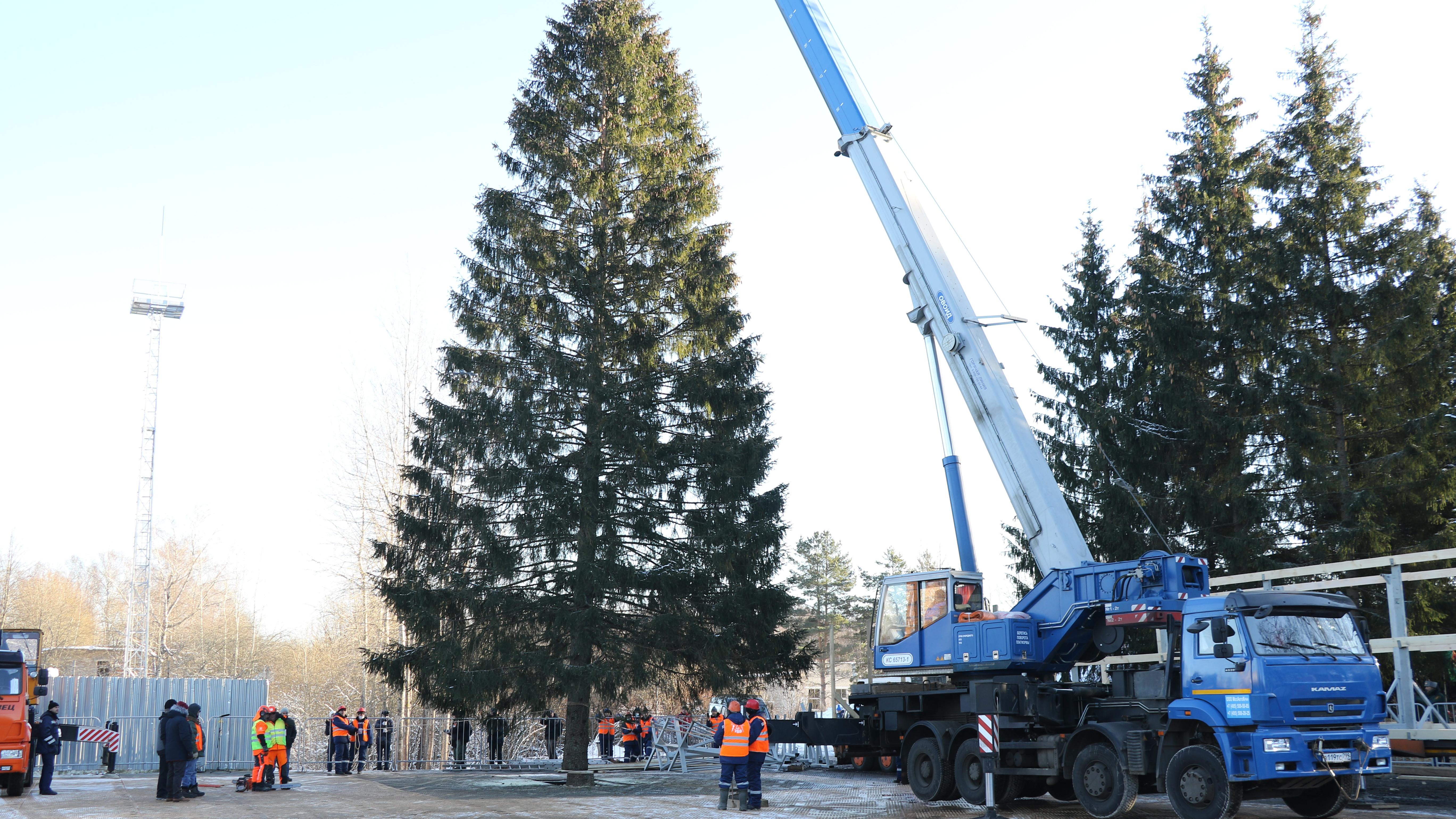 Дорожные службы подготовили путь к месту вырубки главной ели страны в Наро-Фоминском округе