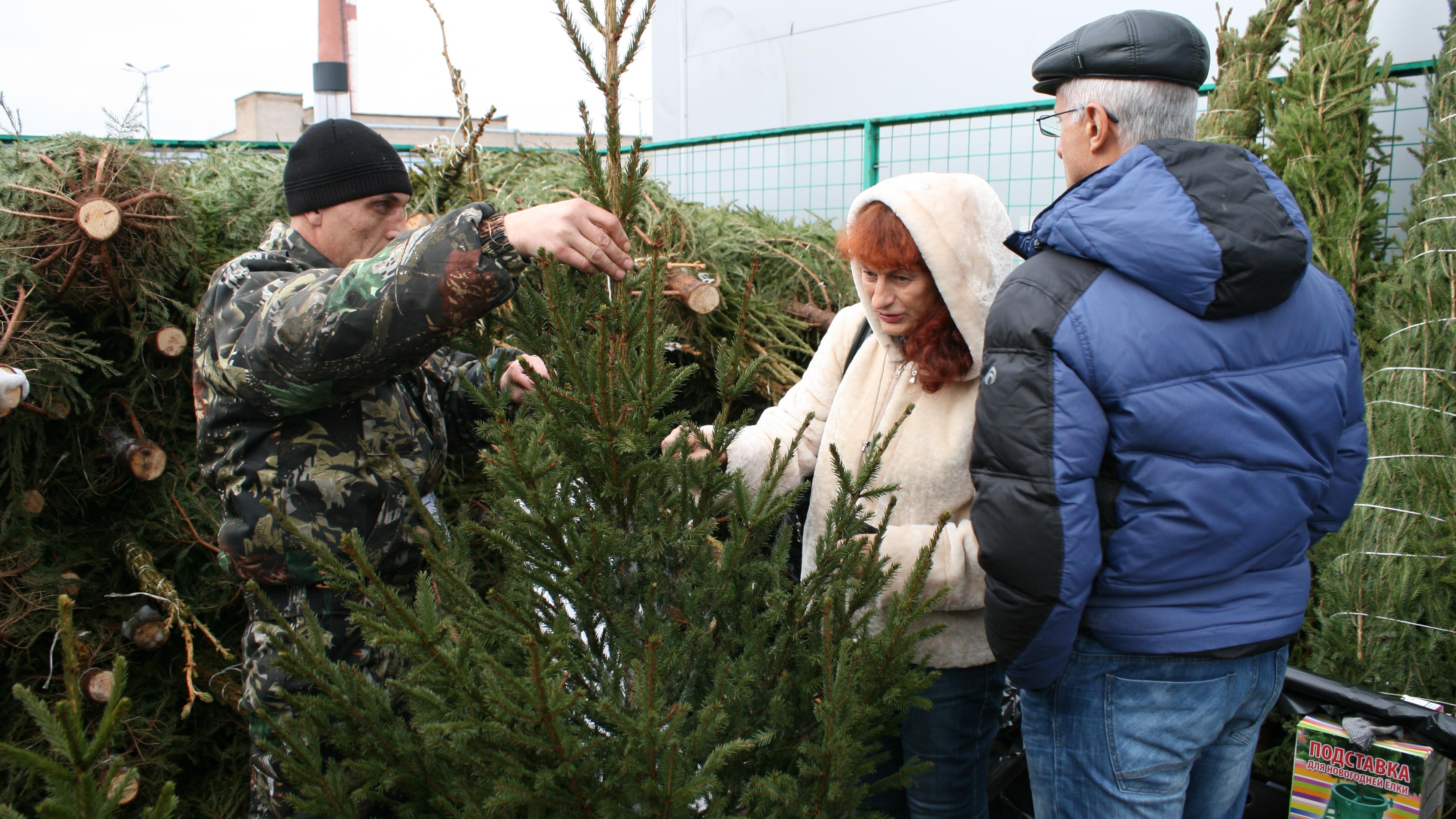 Названа средняя стоимость новогодней елки в Московской области