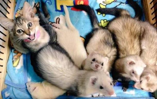 Названы наиболее восприимчивые к коронавирусу животные