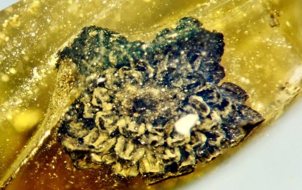 Неизвестный науке цветок нашли в куске янтаря