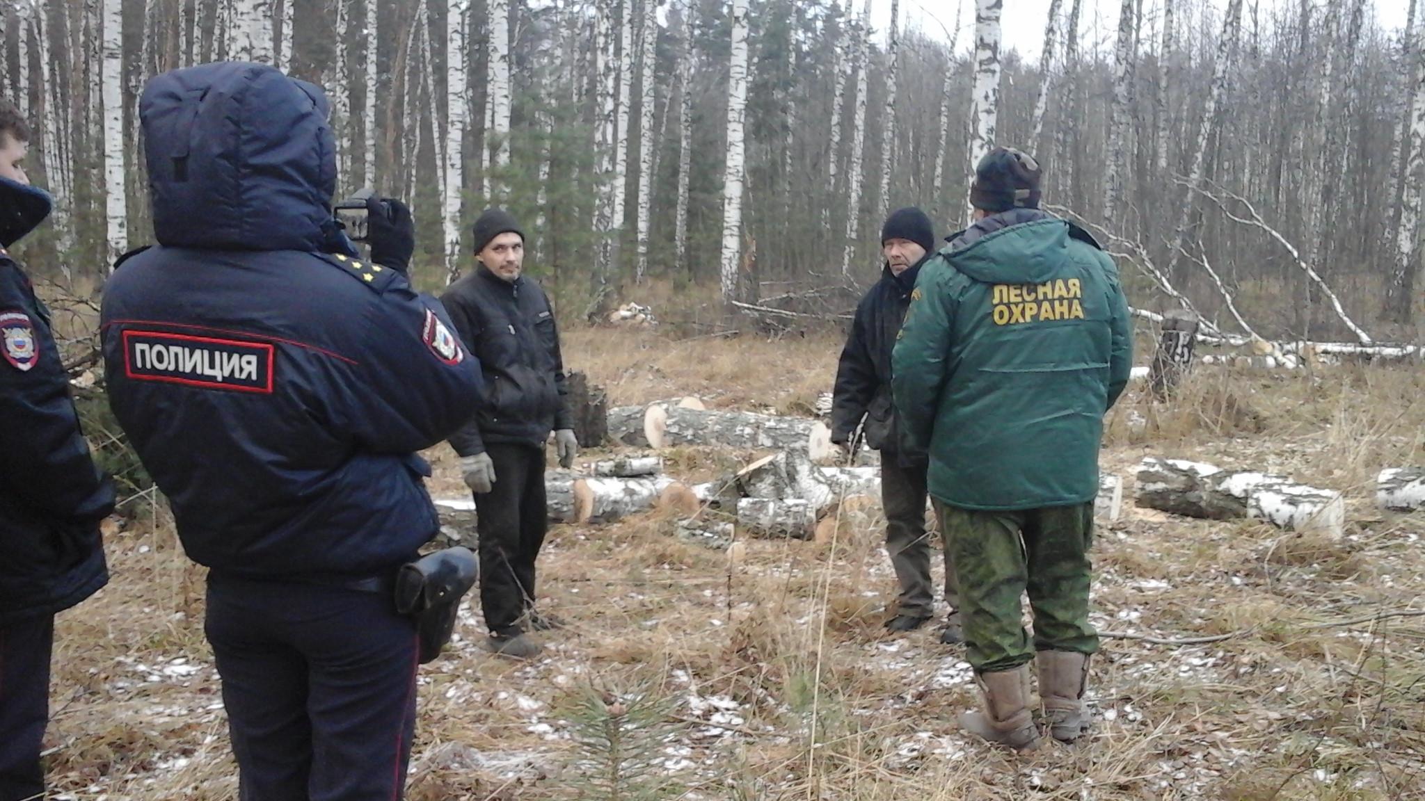 Незаконную рубку деревьев пресекли в Озерском участковом лесничестве