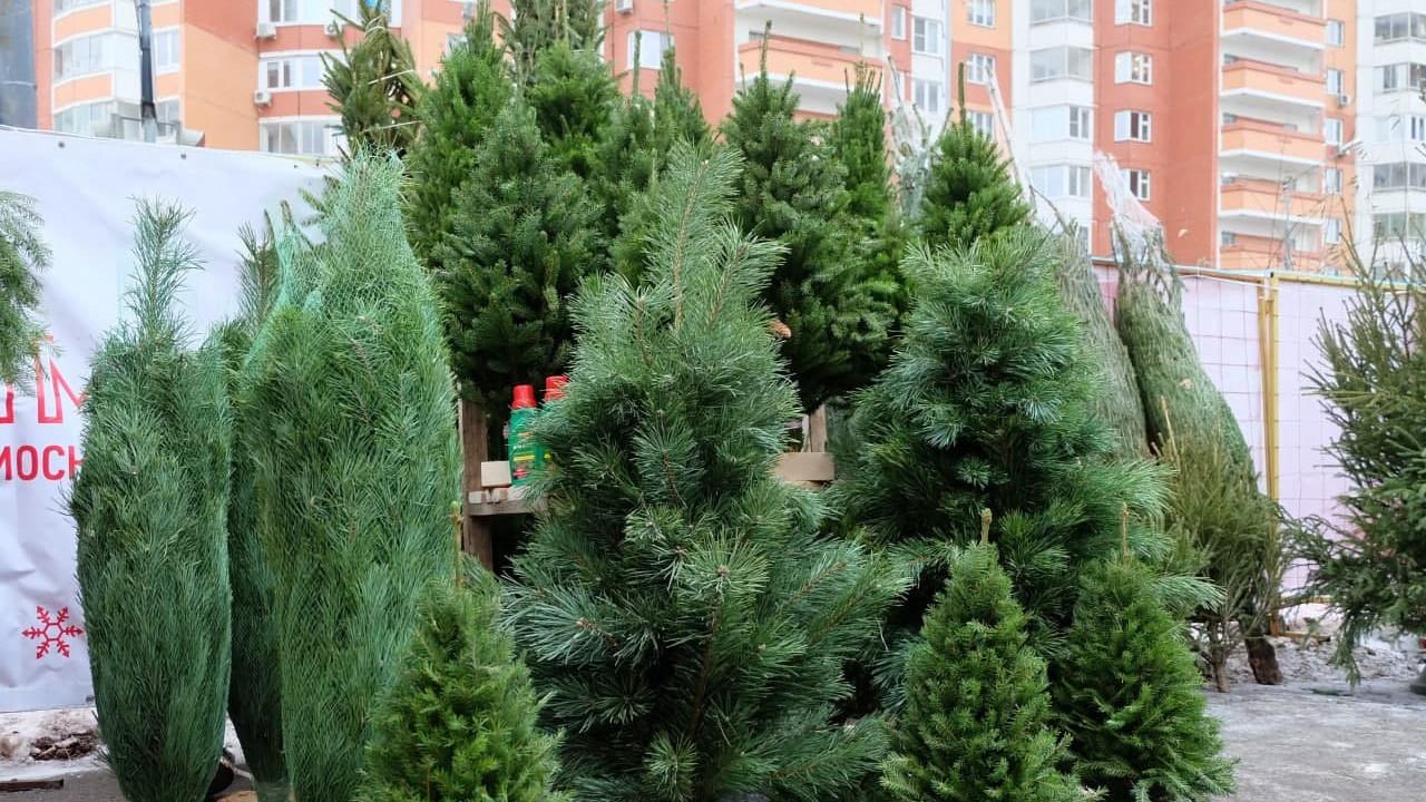 Порядка 400 елочных базаров заработали в Московской области