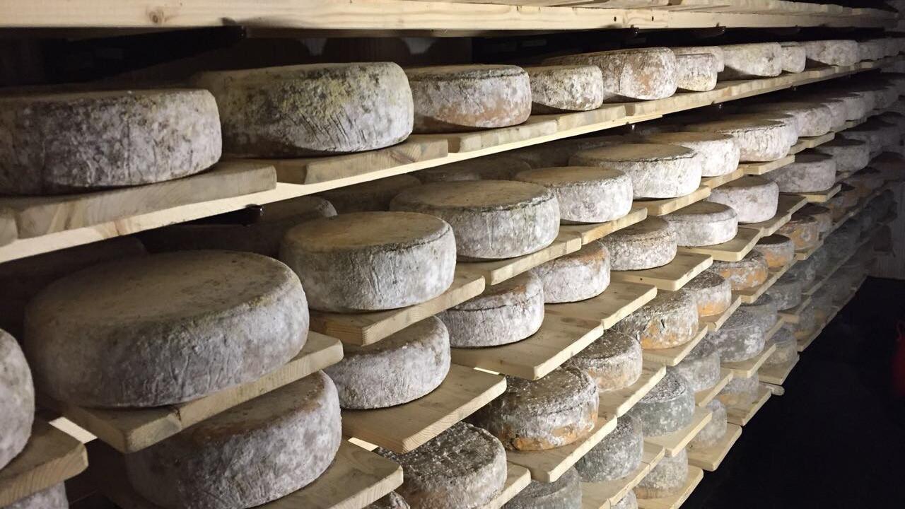 Порядка 47,5 тыс. тонн сыра произвели в Подмосковье за 9 месяцев 2020 года