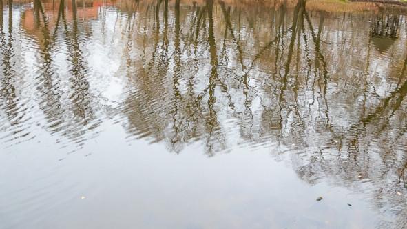 Немчиновский пруд в Одинцове