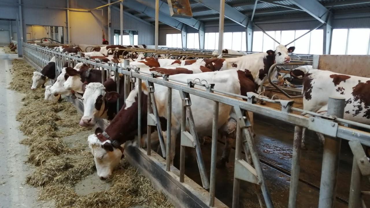 Сельхозпредприятия Подмосковья перевыполнили план заготовки кормов на зимуна 309 тыс. тонн
