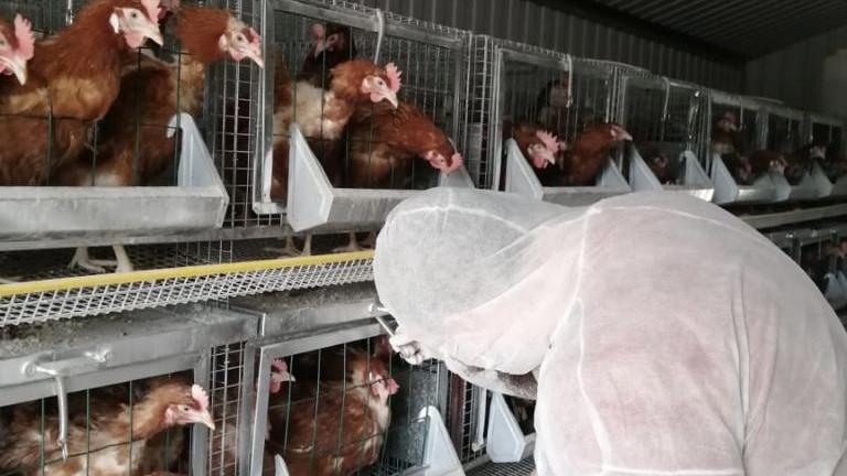 Свыше 65 тыс. лабораторных исследований на птичий грипп провели в Подмосковье