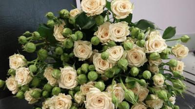Тепличный комплекс в Раменском округе запустил продажу цветов