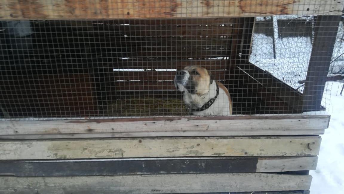 Владелец покусавшей людей собаки в Раменском получил предписание Минсельхозпрода региона