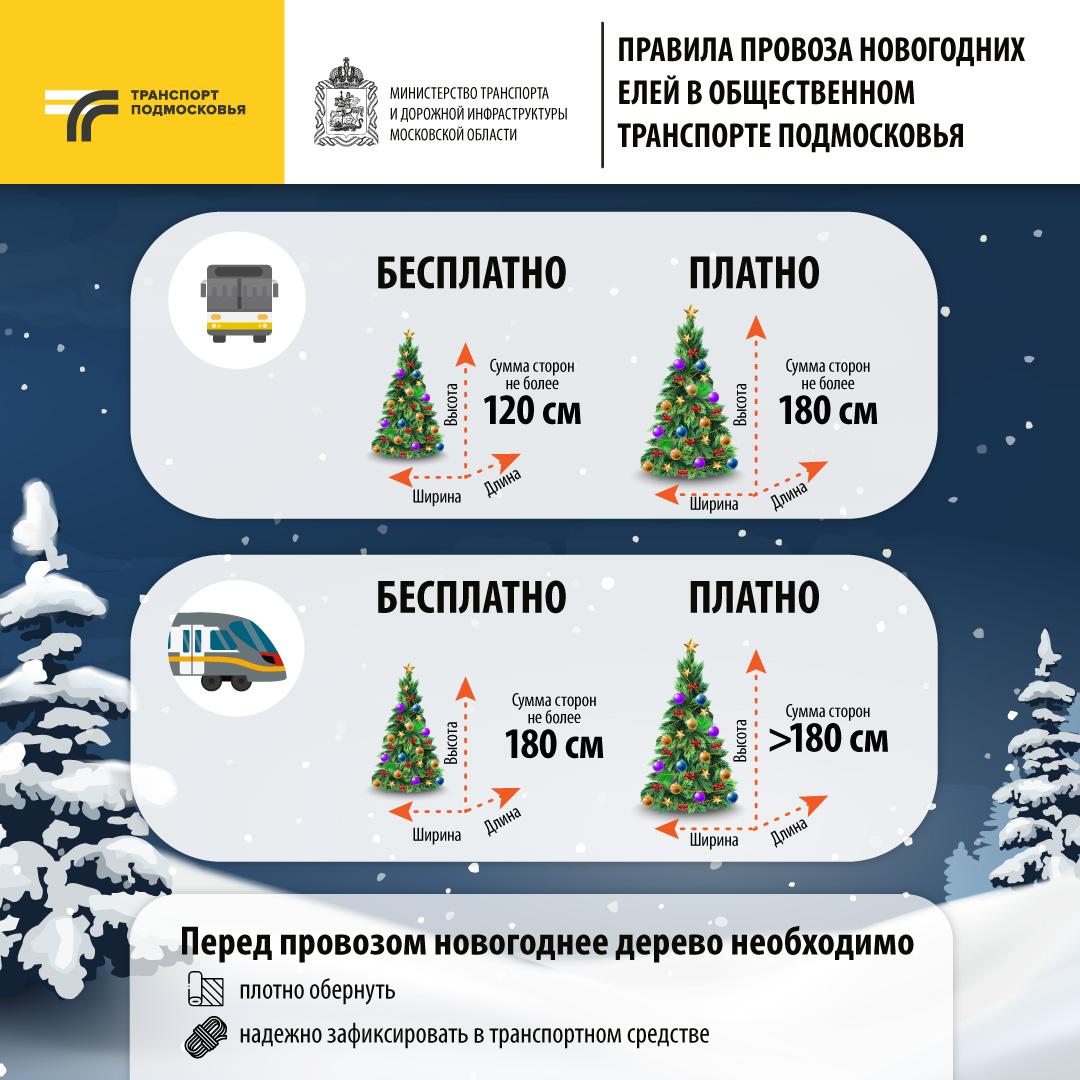 Жителям Подмосковья рассказали, как правильно провезти елку в общественном транспорте