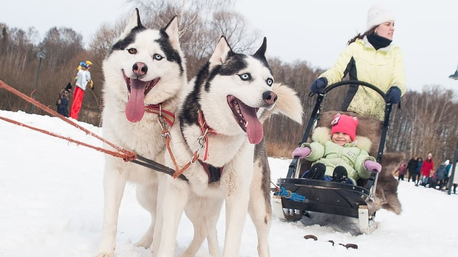 Жителям региона рассказали о мероприятиях «Зимы в Подмосковье» на новогодних праздниках