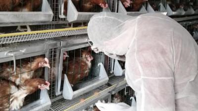 Более 2,65 млн голов птицы провакцинировали в хозяйствах Подмосковья с начала года