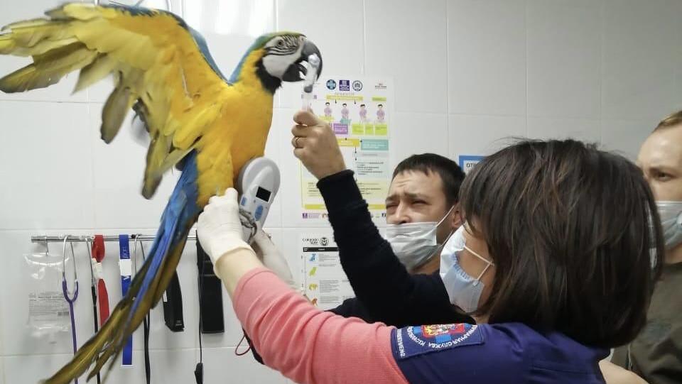 Более 6 тыс. животных получили помощь в ветклиниках Подмосковья в новогодние праздники