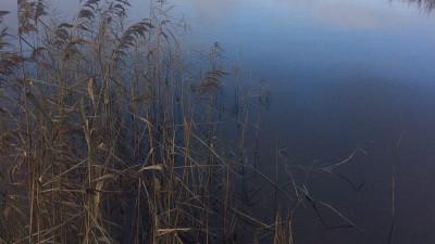 Две егорьевские компании оштрафовали за загрязнение реки