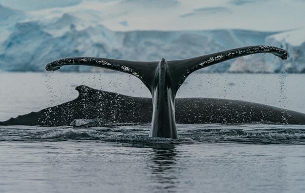 Над Антарктикой закрылась озоновая дыра-рекордсмен