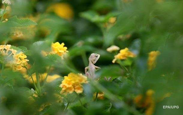 Открыта самая маленькая рептилия на планете
