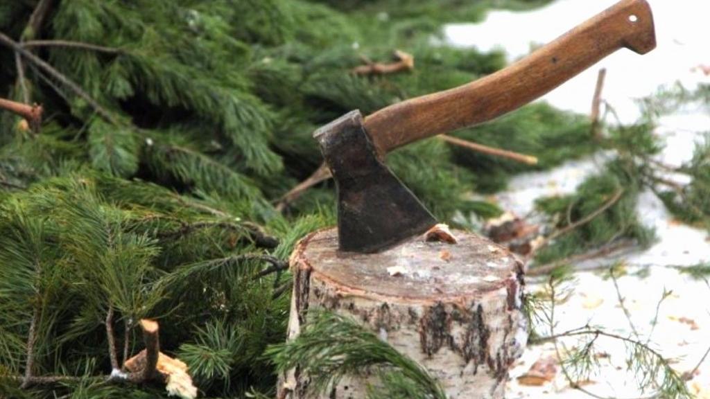 Свыше 1,8 тыс. рейдов по пресечению нелегальной вырубки елей провели в Московской области