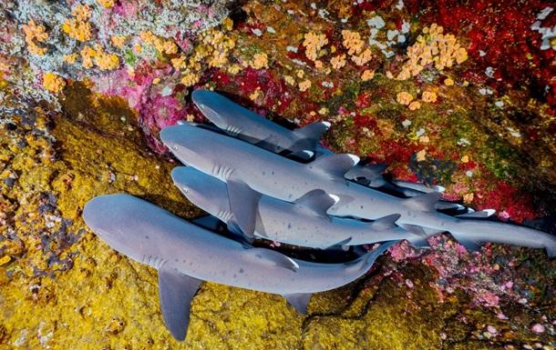 Ученые заявляют о резком сокращении популяции акул и скатов