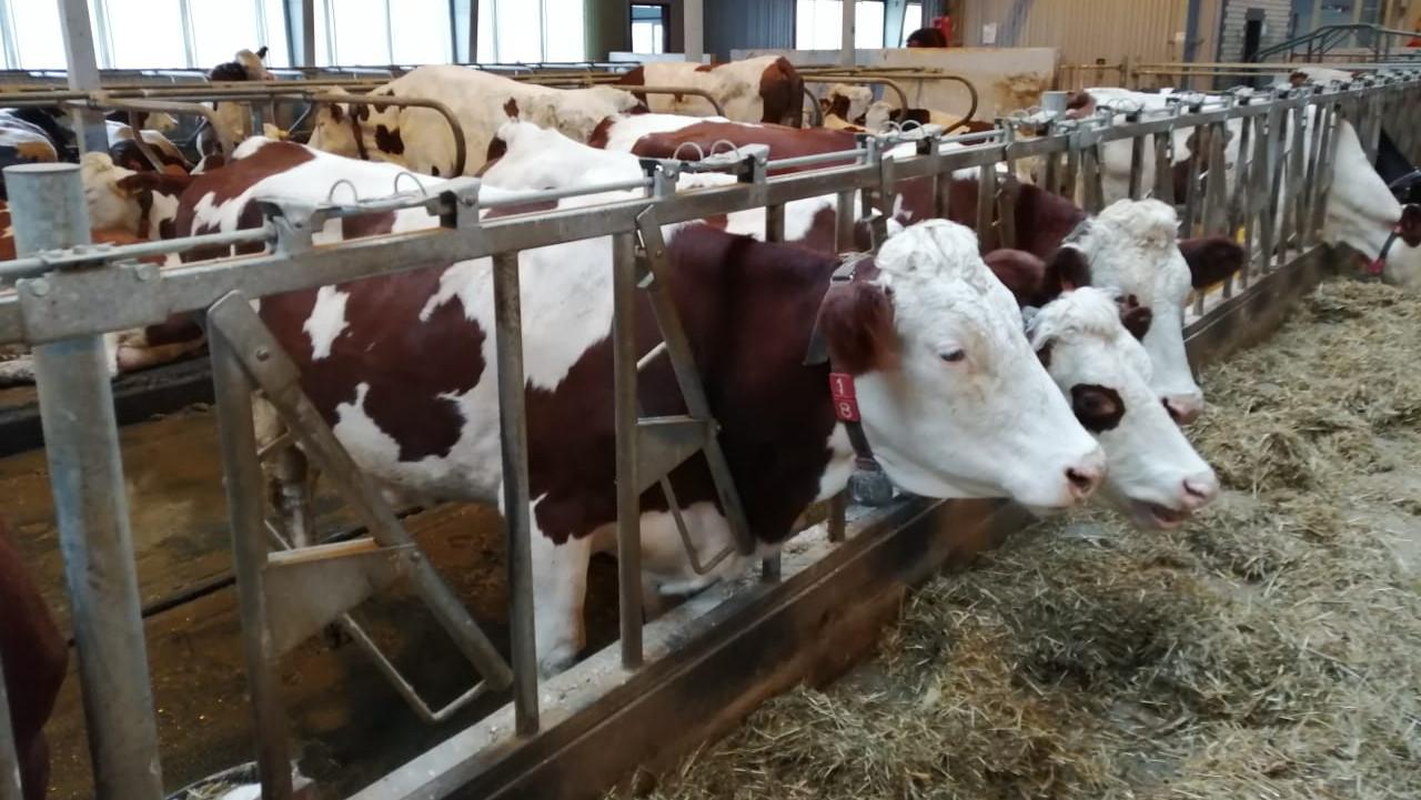 Валовое производство молока выросло в Подмосковье на 6% за 2 недели 2021 года