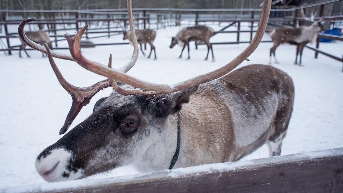 Жителям Московской области рассказали о зимних развлечениях в округах