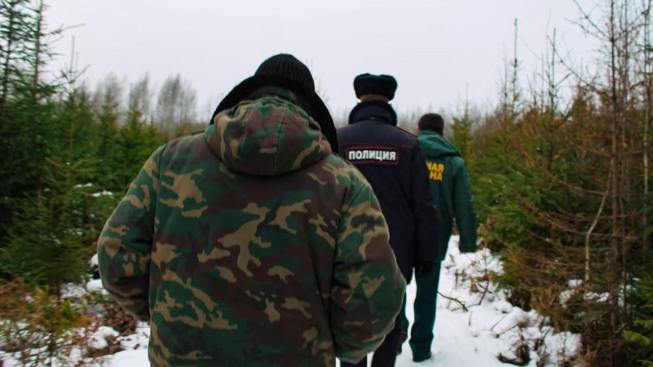 Более 12 млн рублей взыскали за нарушения лесного законодательства в Подмосковье в январе