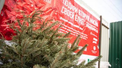 Более 42 тыс. новогодних деревьев сдали на переработку жители Подмосковья