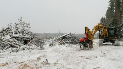 Более 5,5 тыс. га леса очистят от сухой и пораженной болезнями древесины в Подмосковье