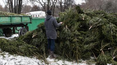 Более 50 тыс. елок сдали на переработку в Подмосковье за месяц