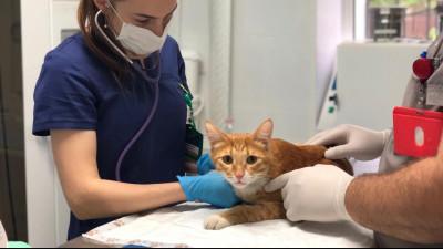 Более 600 ветеринарных сопроводительных документов оформили в Подмосковье с начала года
