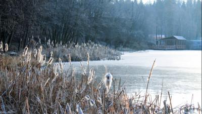 Истринскую компанию обязали освободить водоохранную зону