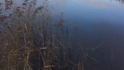 Красногорскую фирму оштрафовали за сброс в реку десяти видов загрязняющих веществ