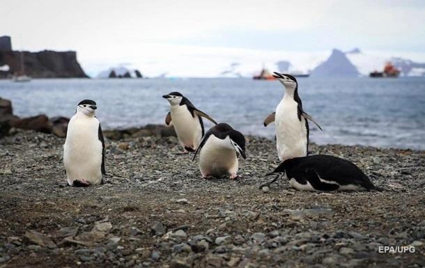 Локдаун привел к глобальному потеплению на Земле - ученые