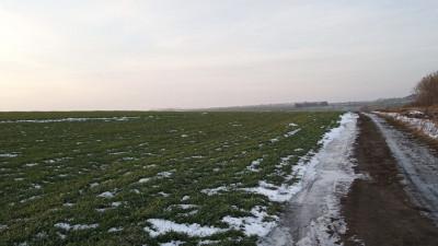 Почти 140 га неиспользуемых сельхозземель в Истре продали на торгах