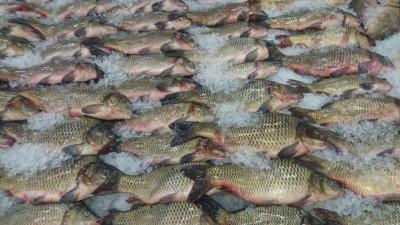 Подмосковье экспортировало более 5,4 тыс. тонн рыбы и морепродуктов в 2020 году