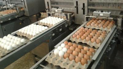 Порядка 140 млн яиц произвели в Подмосковье в 2020 году