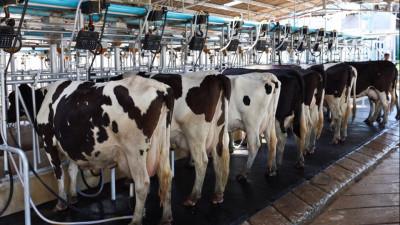 Производство молока в Подмосковье планируется увеличить в 2021 году до 800 тыс. тонн