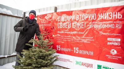 Рекордное число елок сдали жители Подмосковья в рамках эко-акции за две недели