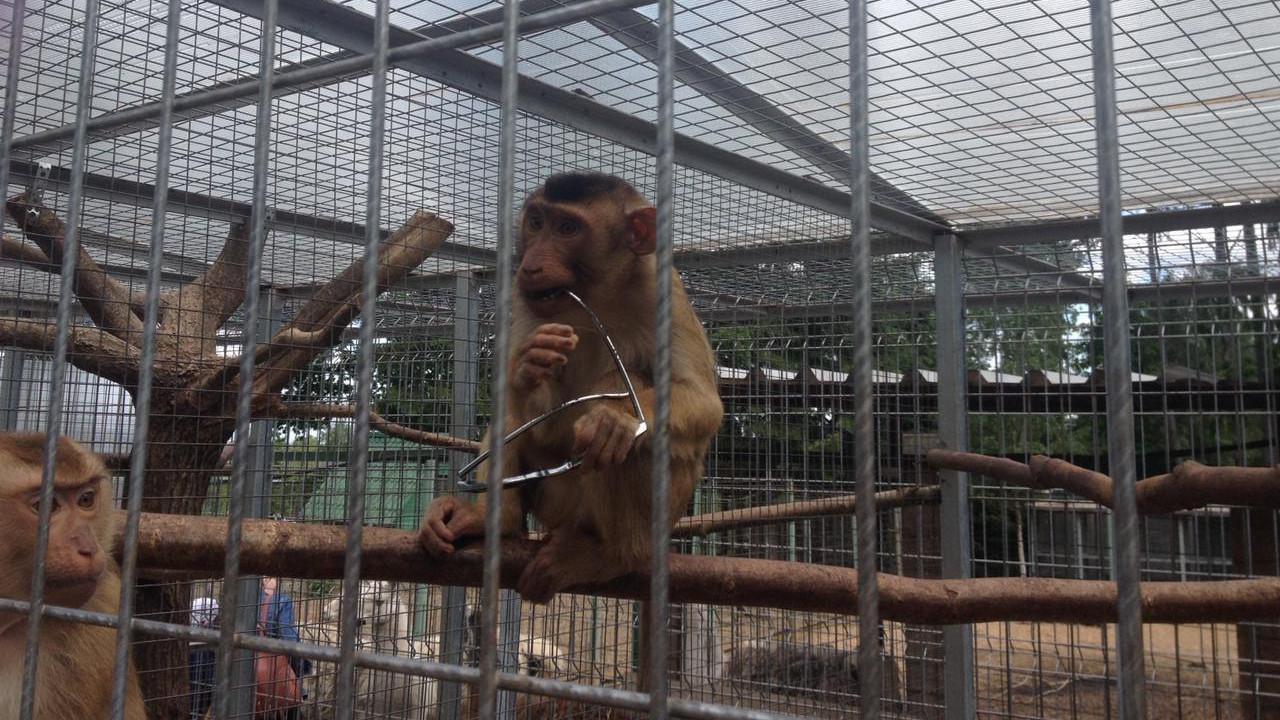 Специалисты ветеринарной службы в Подмосковье осмотрели около 130 обезьян