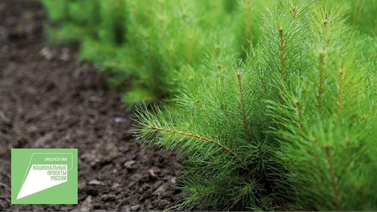 Свыше 2,7 га лесов восстановят в Подмосковье в 2021 году