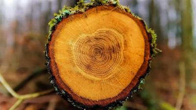 Жителям Подмосковья рассказали про годичные кольца деревьев