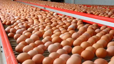 Более 5,2 миллиона штук яиц произвели в Подмосковье в январе