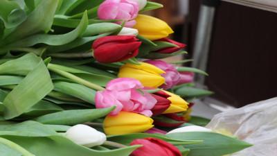 Цветы к 8 Марта в Московской области можно купить в 1,5 тыс. торговых точек