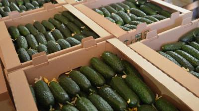 Производство тепличных овощей увеличилось в Подмосковье на 30% с начала года