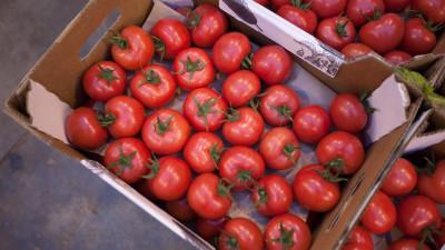 Свыше 25 тыс. тонн овощей собрали в теплицах Подмосковья с начала года