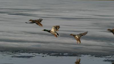 Власти уточнили правила весенней охоты в Московской области