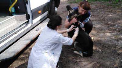 Число случаев бешенства животных снизилось в Подмосковье в 5 раз