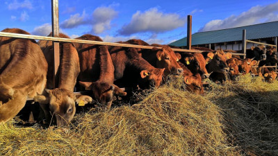 Фермерское хозяйство «Эко Молоко» закупило на средства гранта15 голов скота породы Джерси