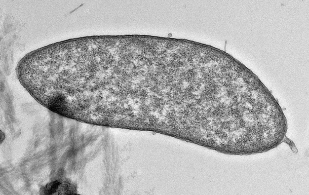 Найдены микробы, способные производить чистую медь