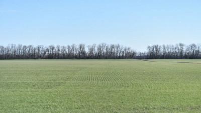 Порядка 12 тыс. гектаров озимых зерновых культур подкормлено в Подмосковье