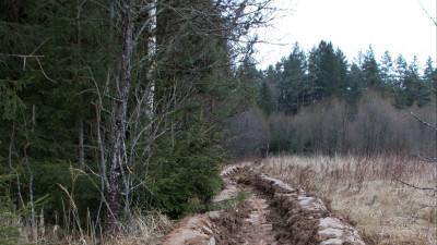 Сервис для собственников граничащих с лесами земель заработал в Подмосковье